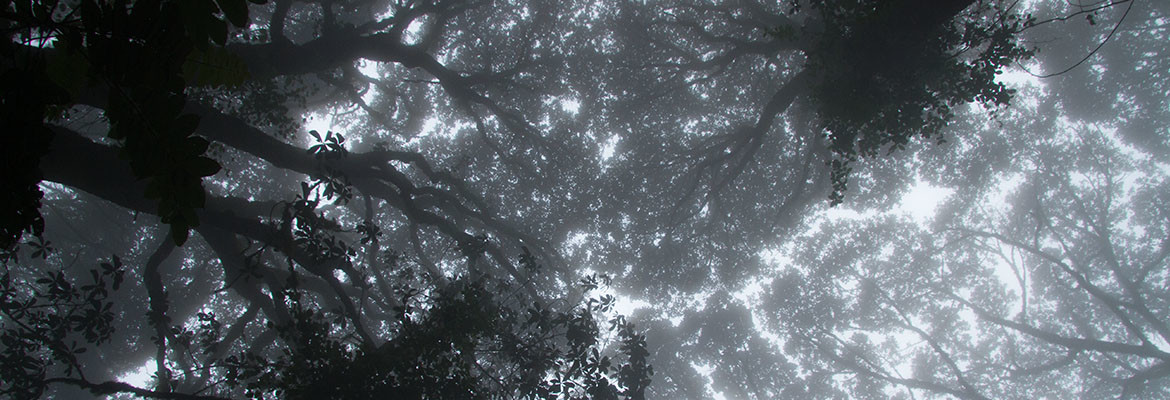 A Ceiling of Trees